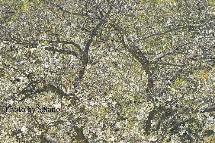 三浦半島の里山(2020年3月)~みー坊の里山あそび~_b0348205_22205736.jpg