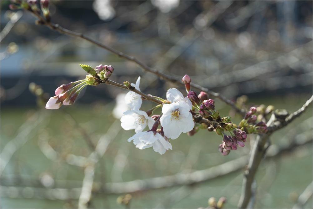 大団円 3月24日(火)  6861_b0069507_05483020.jpg