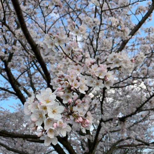 春分の日から_c0227612_18271947.jpg