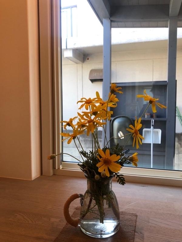 庭の剪定があるとお聞きしたのでサプライズ訪問してきました。_e0029115_16495767.jpg