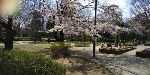 相談室の近所でお花見_b0255217_11013563.jpg