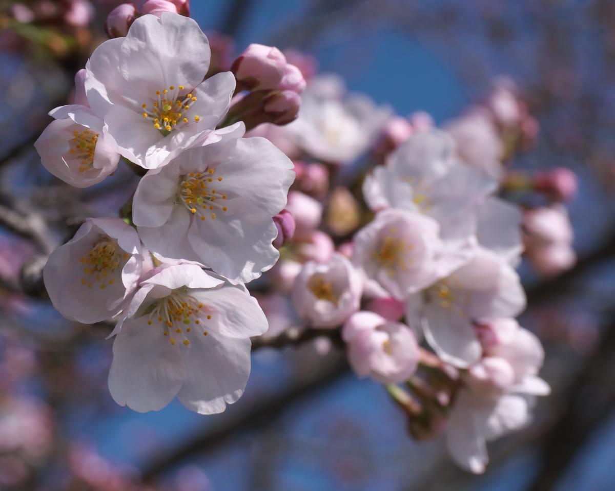 藤原宮跡にも春!_b0408917_01212931.jpg