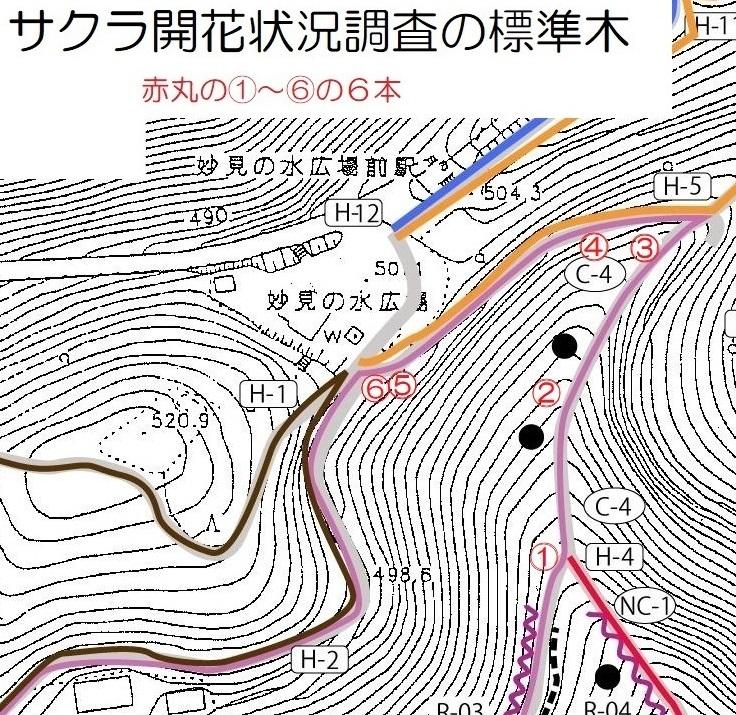 2020年3月24日(火) 臨時(桜開花状況調査)_d0024426_21565497.jpg