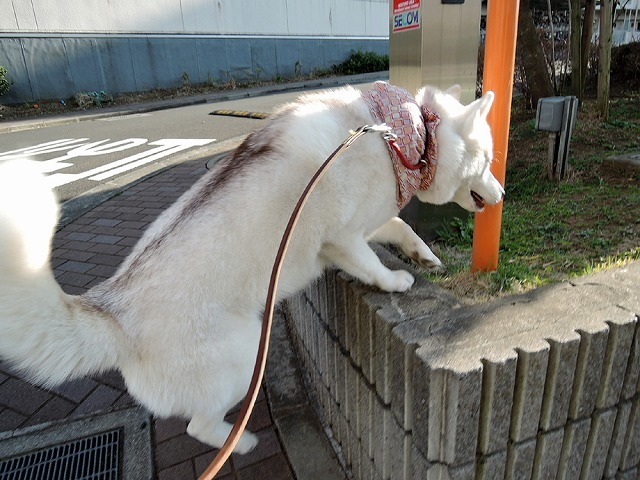 散歩屋日誌【38】_c0062832_15581538.jpg