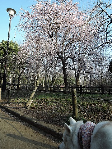 散歩屋日誌【38】_c0062832_15594039.jpg