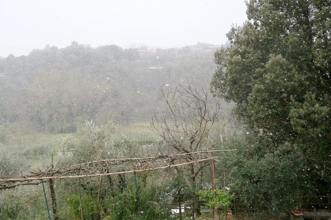 梨すもも花に雪降る春のペルージャ_f0234936_10223364.jpg