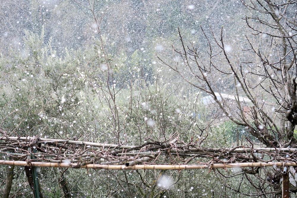 梨すもも花に雪降る春のペルージャ_f0234936_9172041.jpg
