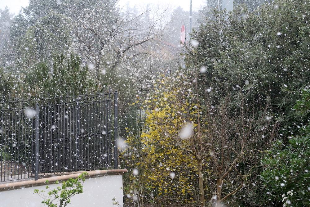 梨すもも花に雪降る春のペルージャ_f0234936_9184333.jpg