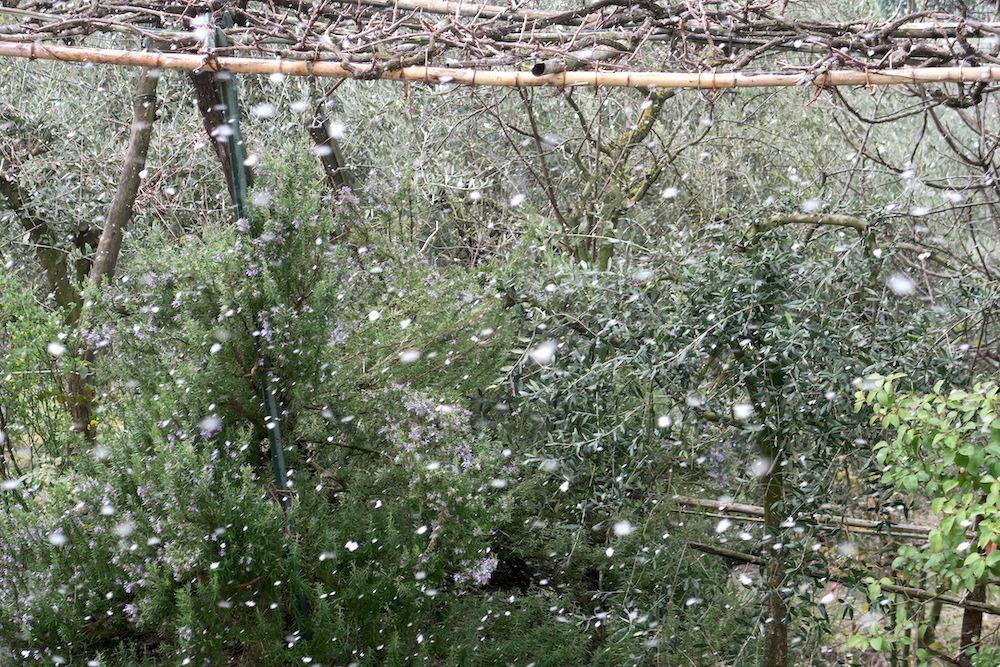 梨すもも花に雪降る春のペルージャ_f0234936_9501212.jpg