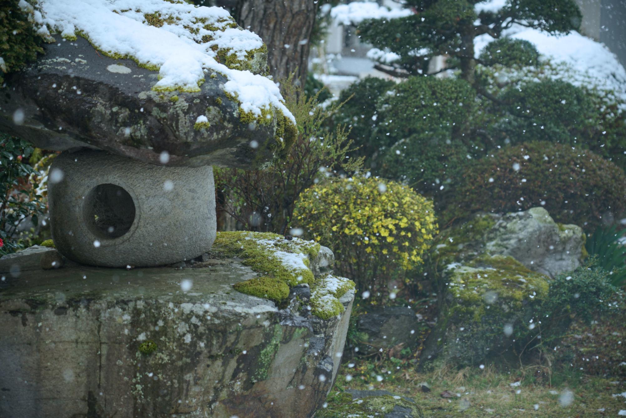 雪降です_b0244538_21572690.jpg