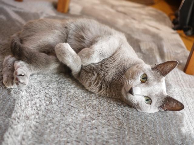 猫のお留守番 ナナちゃん編。_a0143140_21052484.jpg
