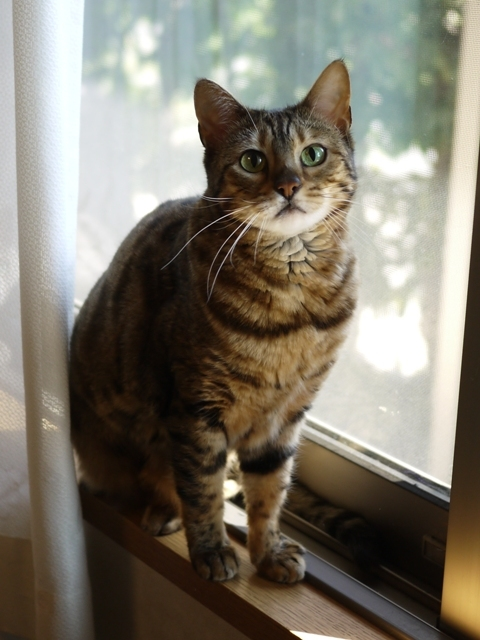 猫のお留守番 ミーちゃん編。_a0143140_21105057.jpg