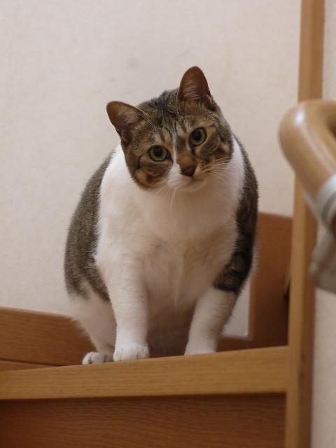 猫のお留守番 クーちゃん編。_a0143140_21135381.jpg