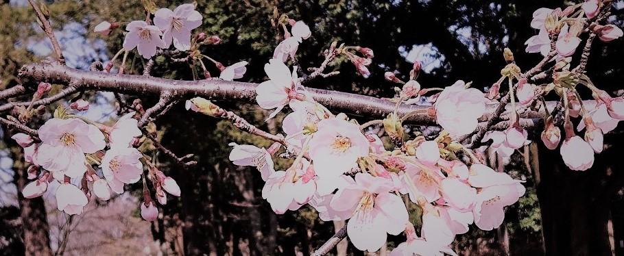 春ですけれども……_c0157242_14050199.jpg