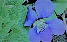 春ですけれども……_c0157242_14075743.jpg