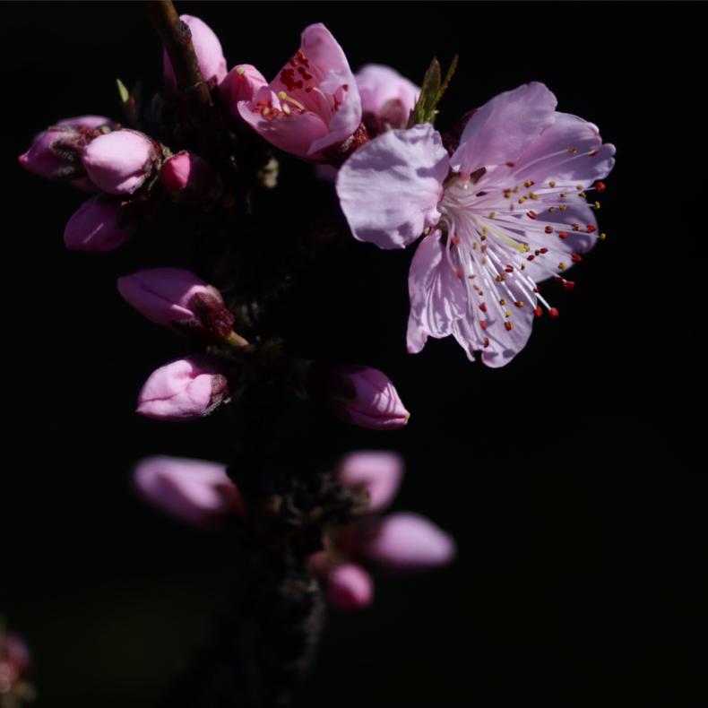 花の写真_c0060143_22485564.jpg