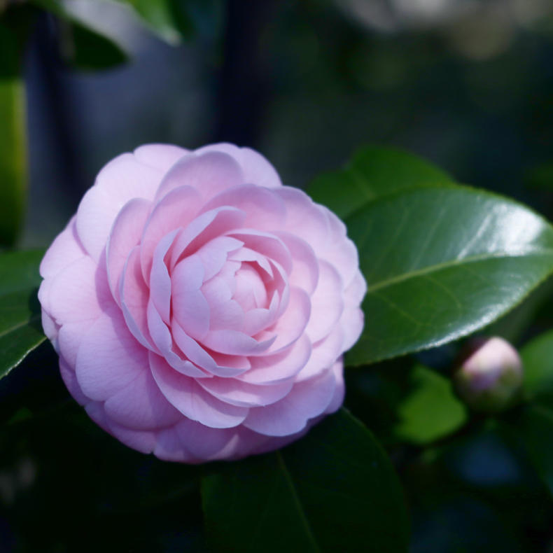 花の写真_c0060143_22485647.jpg