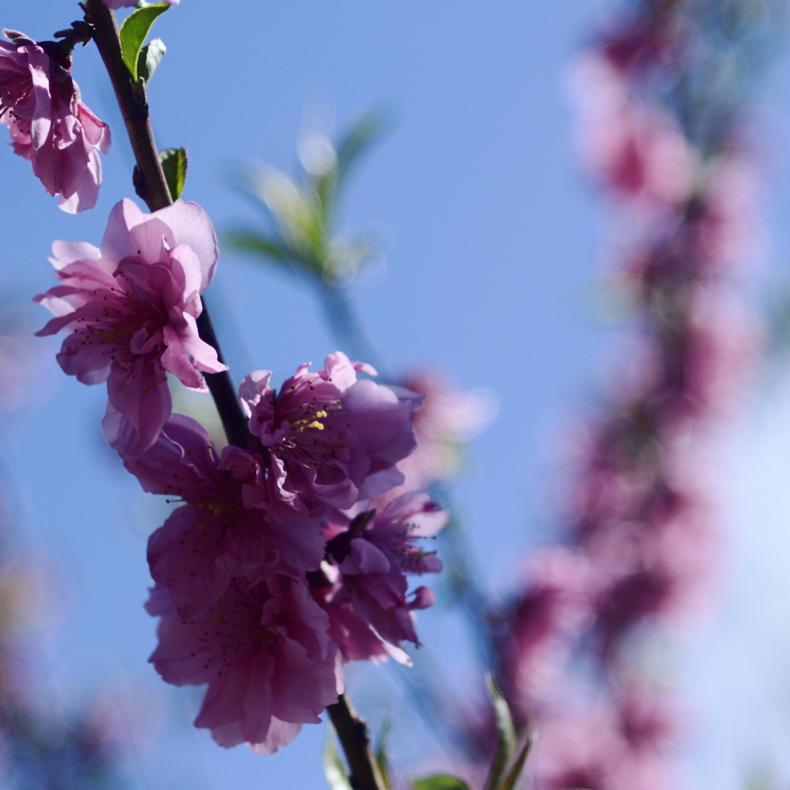 花の写真_c0060143_22485727.jpg