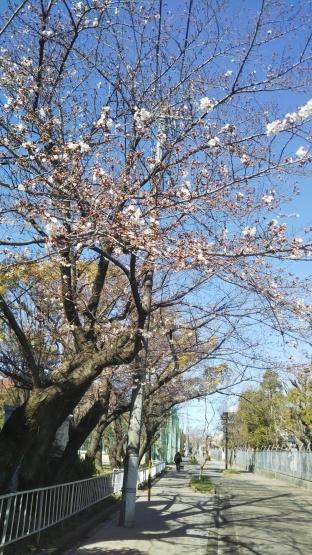 桜_e0179943_09241530.jpg