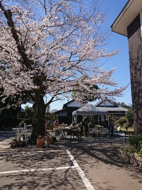 桜満開🌸つくば「ここちテリア」で…「陶芸体験イベント」_f0323446_20304774.jpg