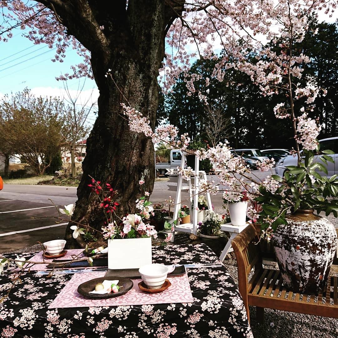 桜満開🌸つくば「ここちテリア」で…「陶芸体験イベント」_f0323446_20311502.jpg
