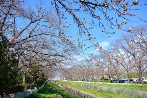 葉菜と巡る甲斐の桜_b0029350_13054262.jpg