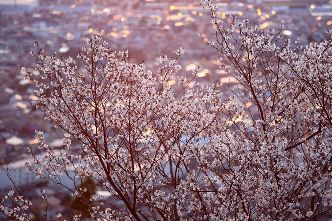 桜 2020_e0403850_21382132.jpg