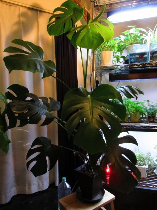 植物「春が近づいてきました」_b0362459_20472510.jpg