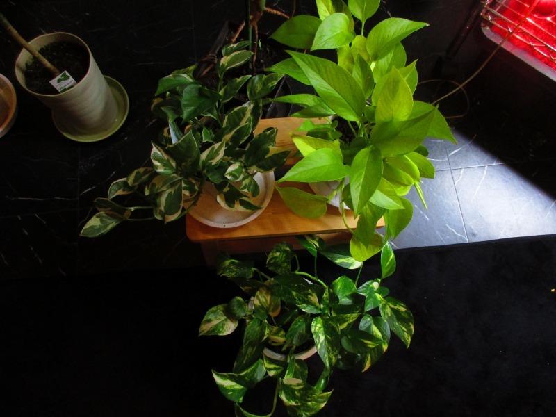 植物「春が近づいてきました」_b0362459_20505008.jpg