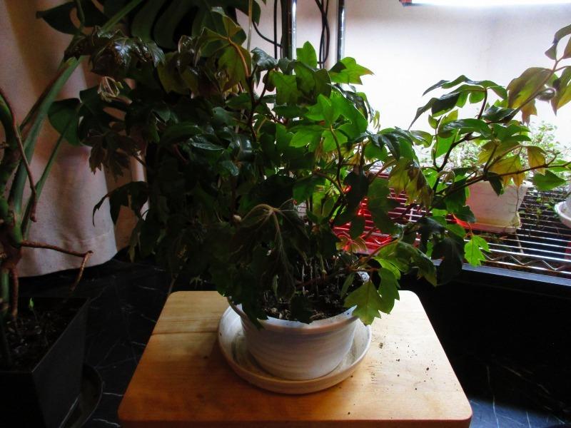 植物「春が近づいてきました」_b0362459_20541493.jpg