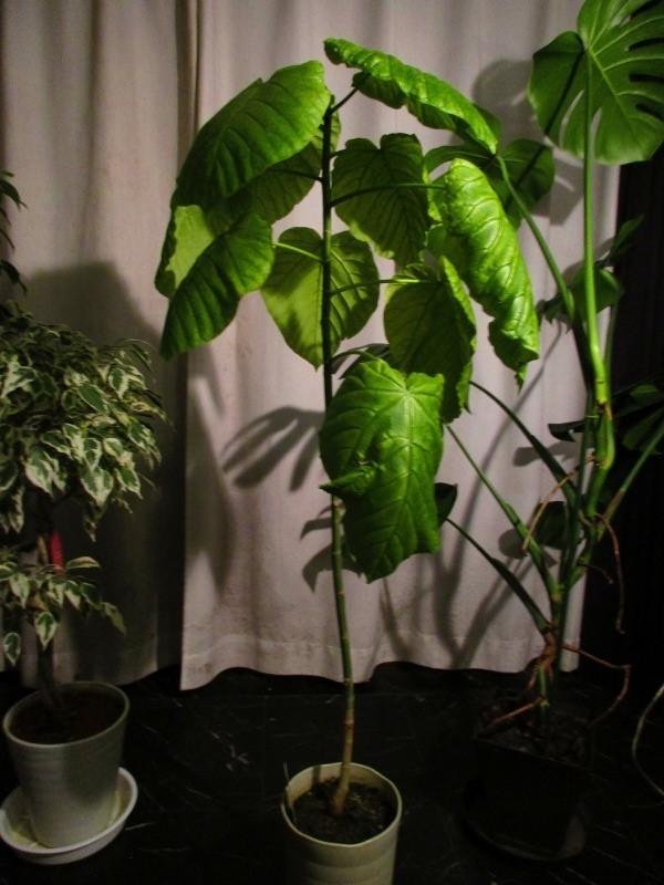 植物「春が近づいてきました」_b0362459_20573287.jpg