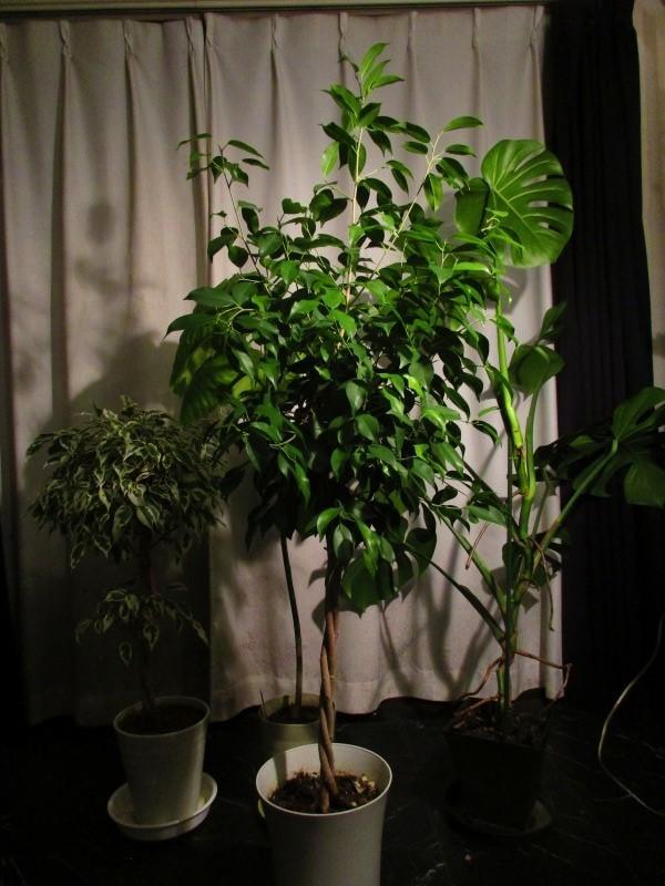 植物「春が近づいてきました」_b0362459_21053616.jpg