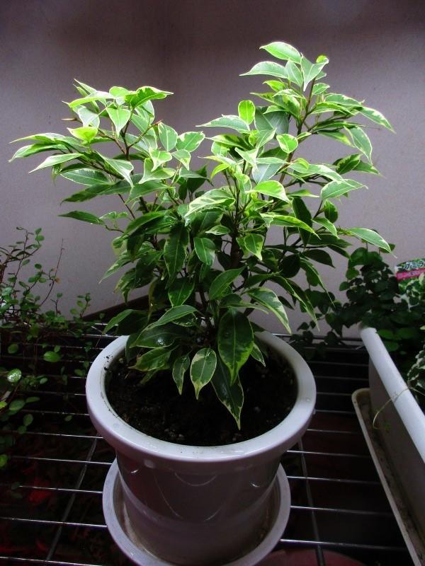 植物「春が近づいてきました」_b0362459_21084720.jpg