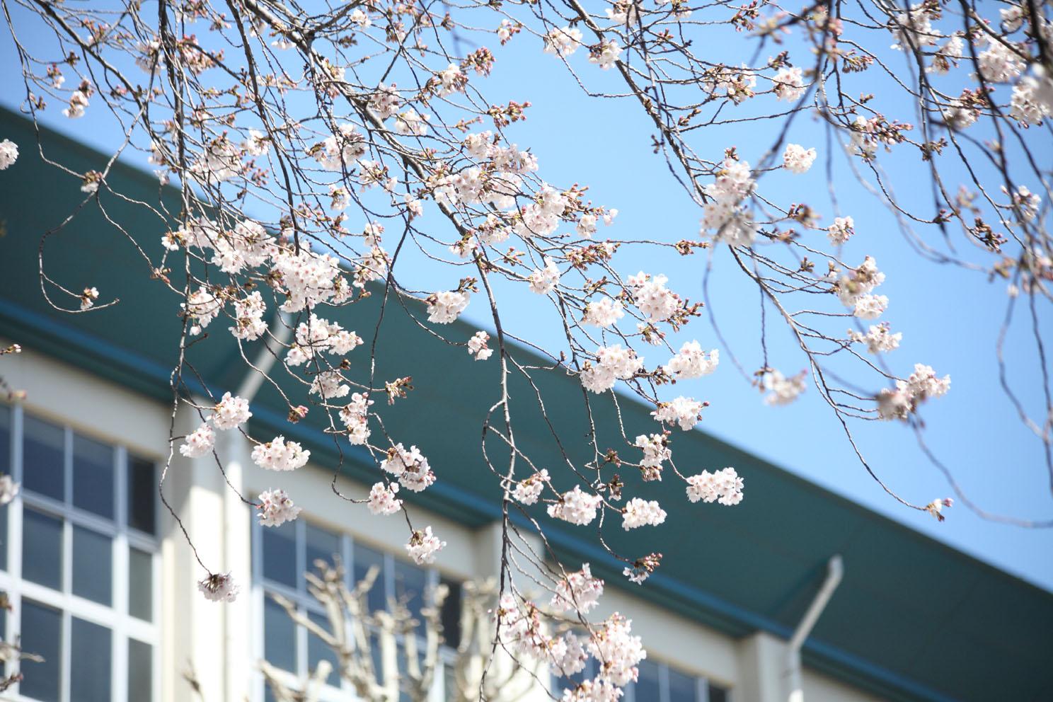 春の陽気_c0299360_2056498.jpg