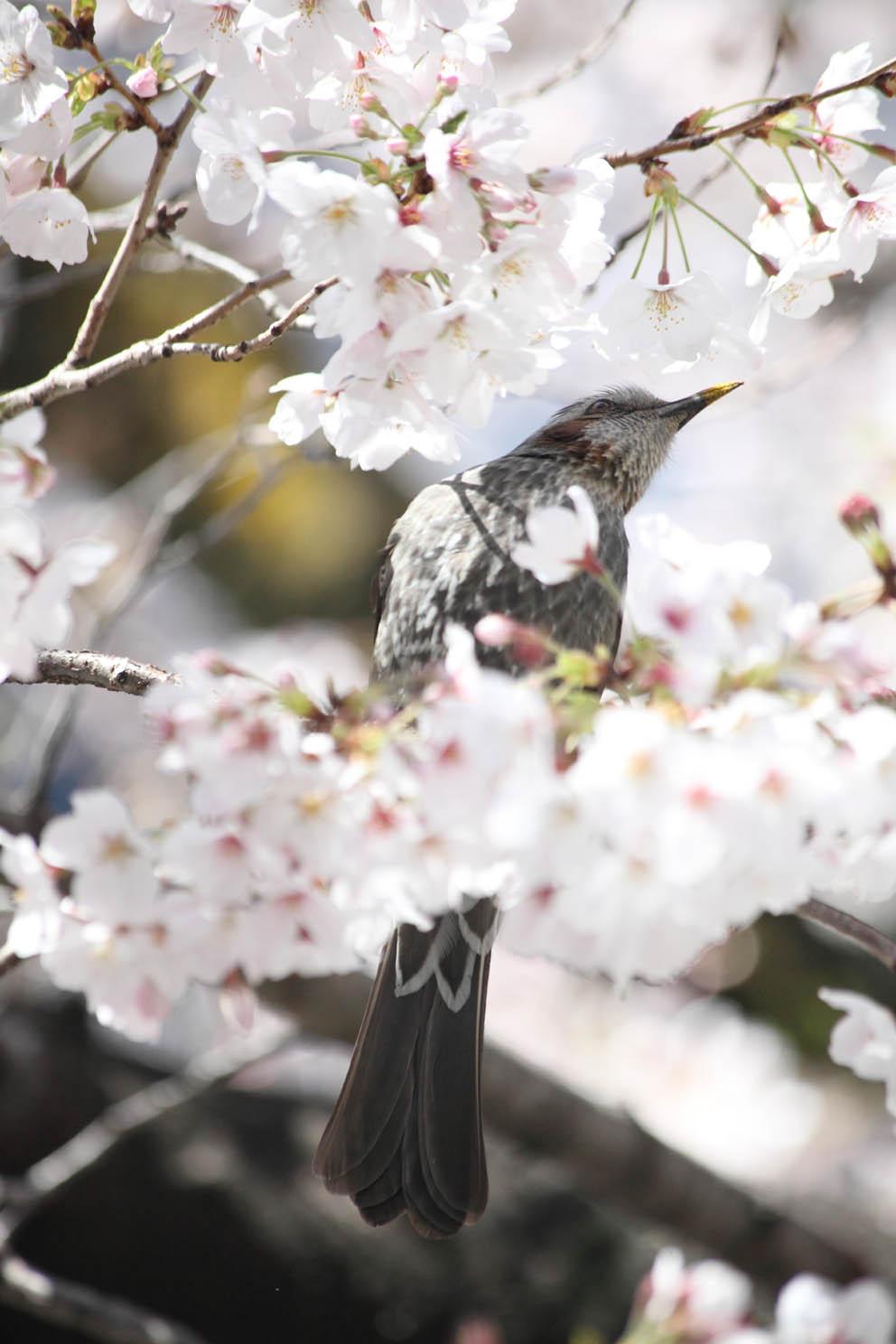 春の陽気_c0299360_21162330.jpg