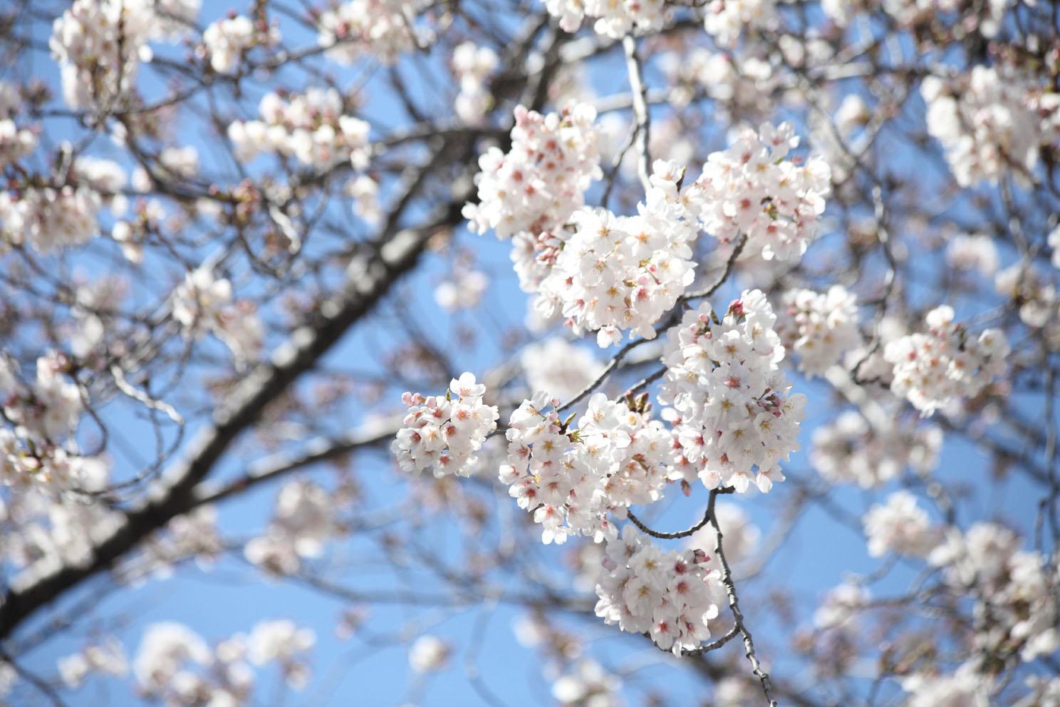 春の陽気_c0299360_2116834.jpg