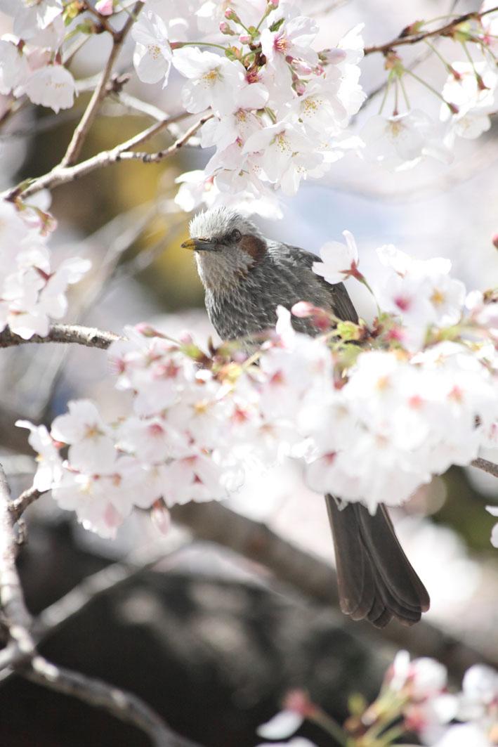 春の陽気_c0299360_2119034.jpg
