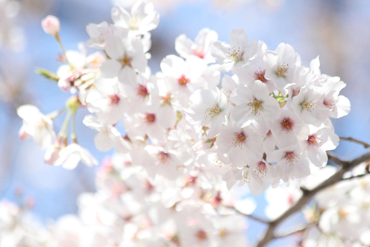 春の陽気_c0299360_21192344.jpg