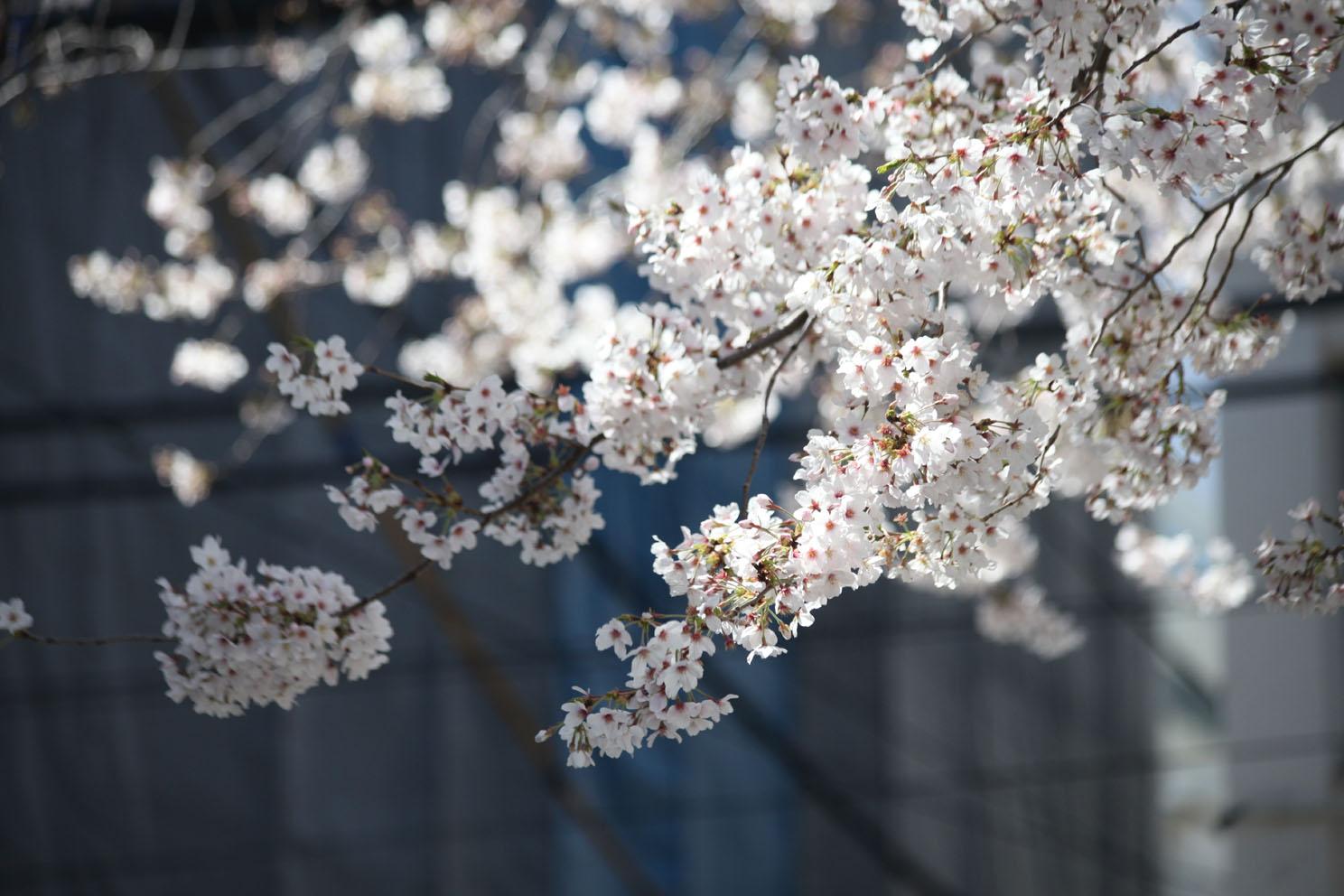 春の陽気_c0299360_2119355.jpg