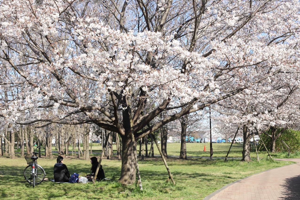 神代植物公園通り_c0299360_2354556.jpg
