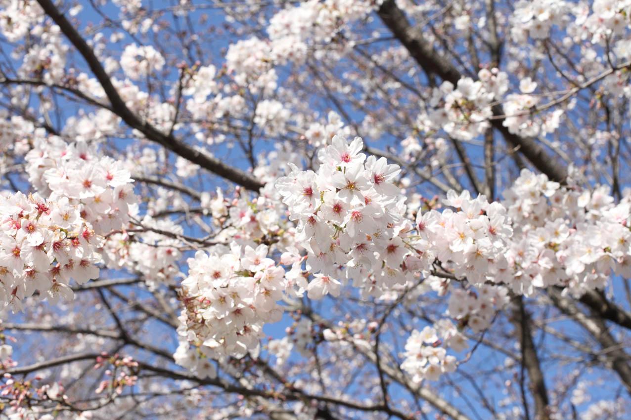 神代植物公園通り_c0299360_23552546.jpg