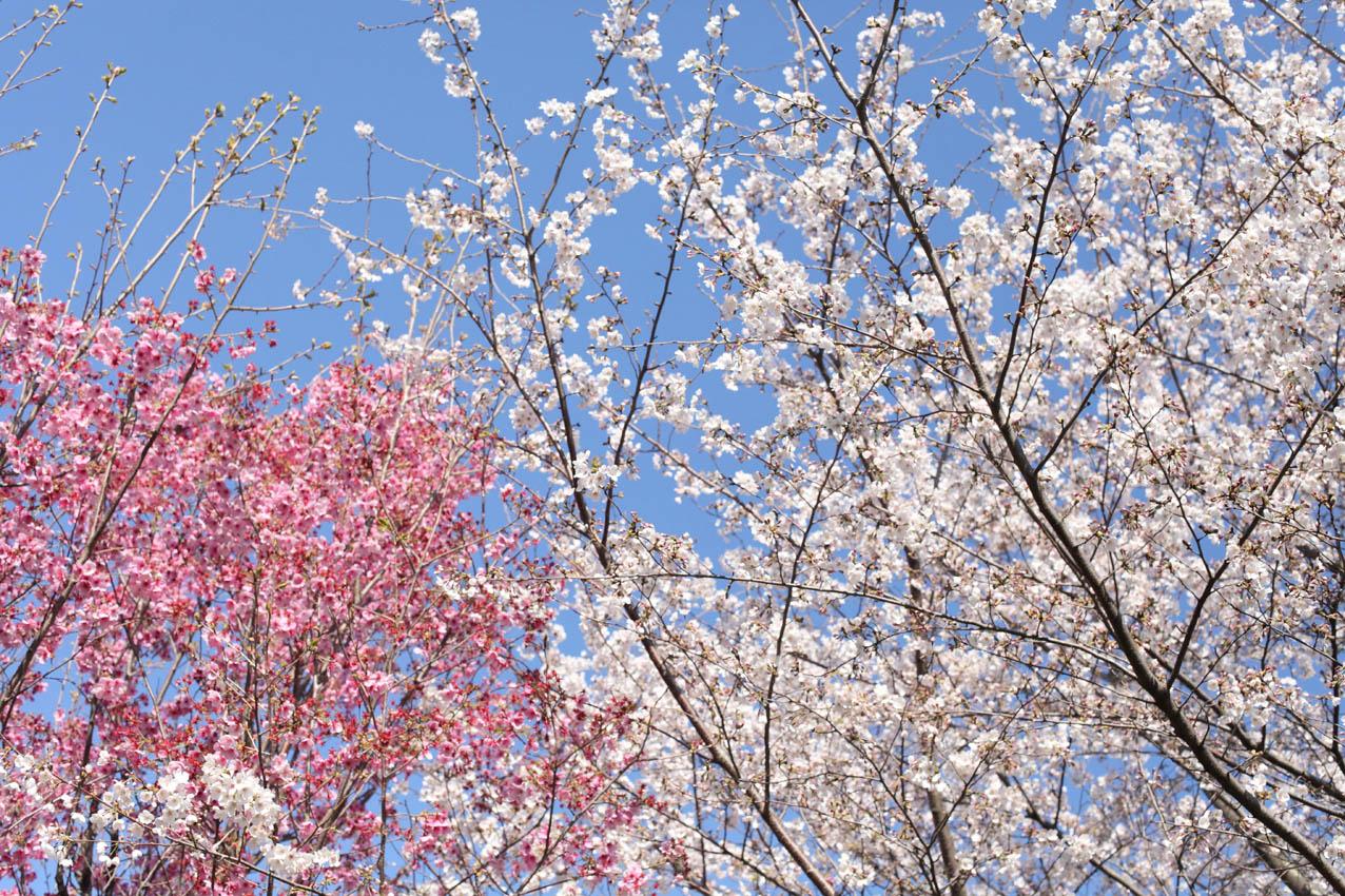 神代植物公園通り_c0299360_23561129.jpg