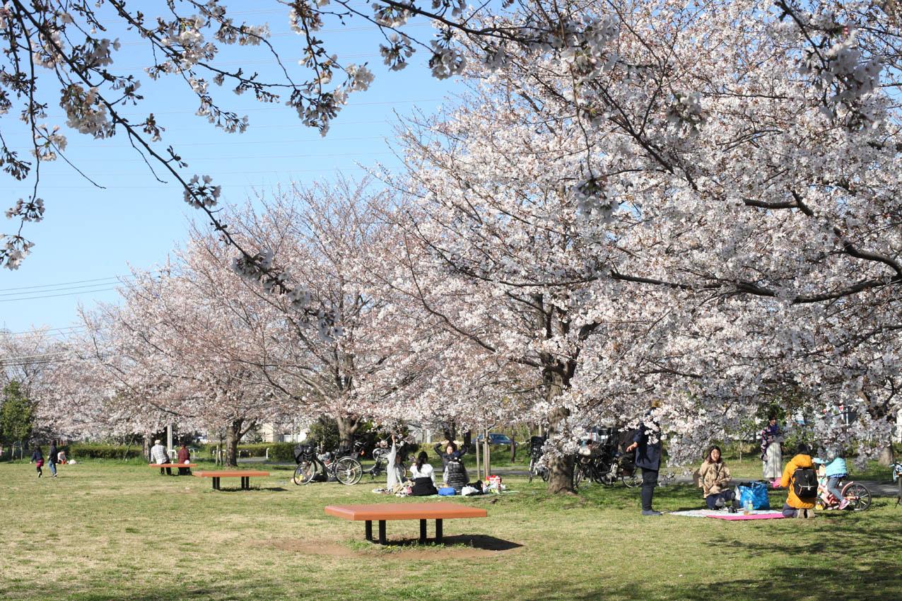 神代植物公園通り_c0299360_23563323.jpg