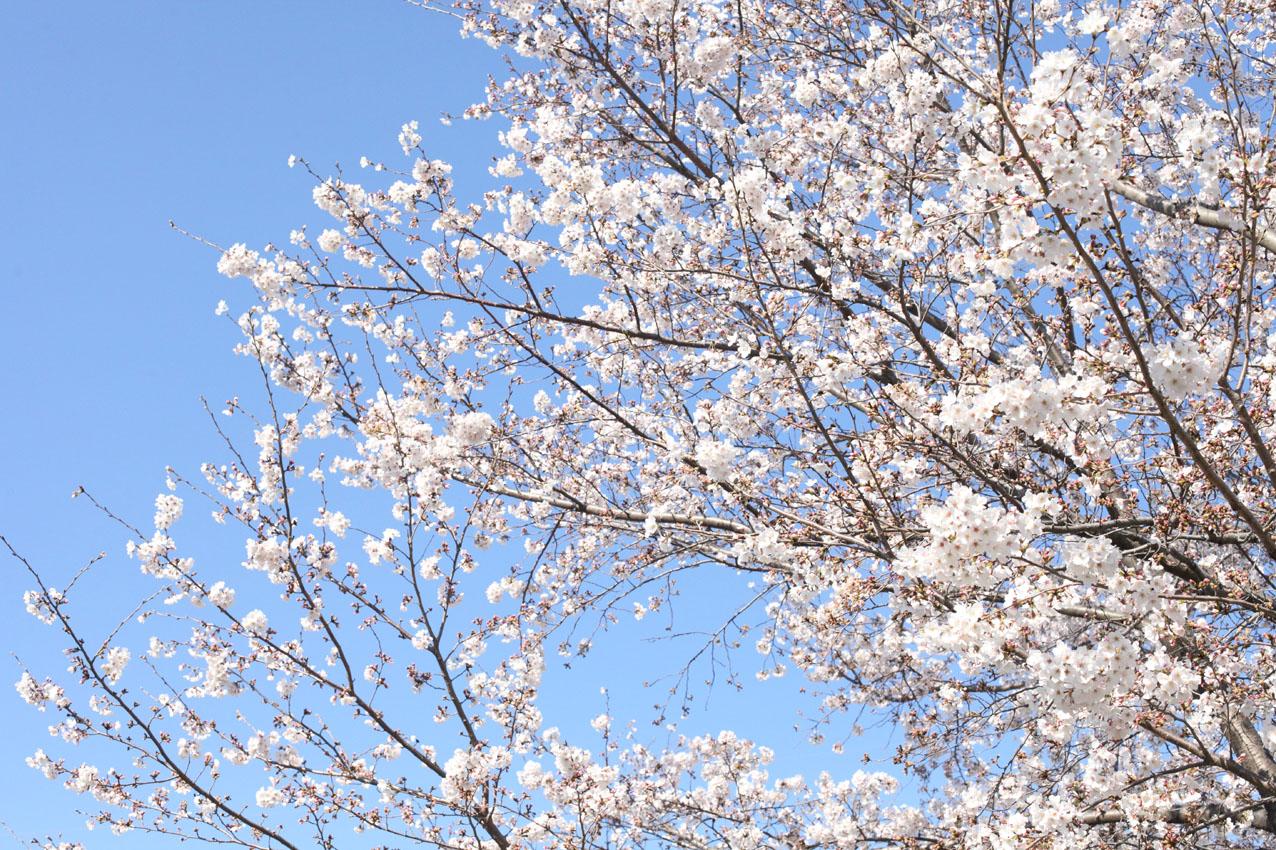 神代植物公園通り_c0299360_23571777.jpg
