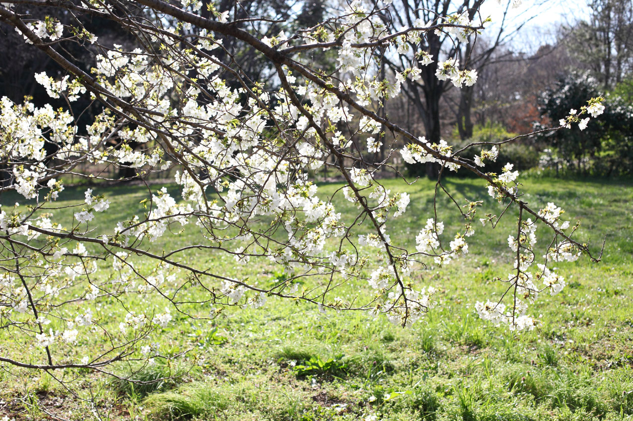 神代植物公園通り_c0299360_23573270.jpg