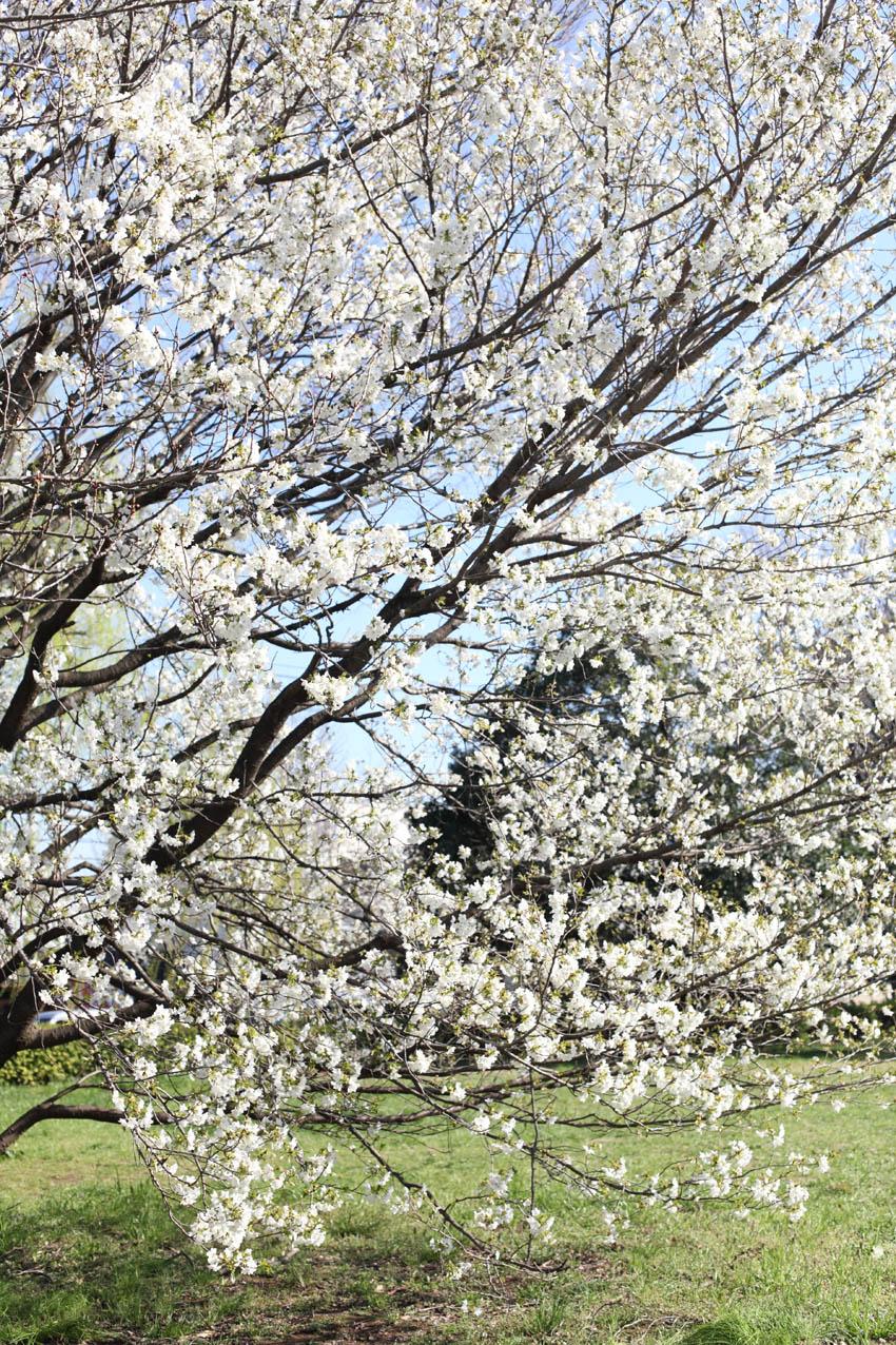 神代植物公園通り_c0299360_23574689.jpg