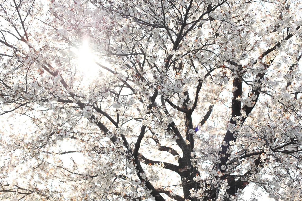神代植物公園通り_c0299360_2358091.jpg