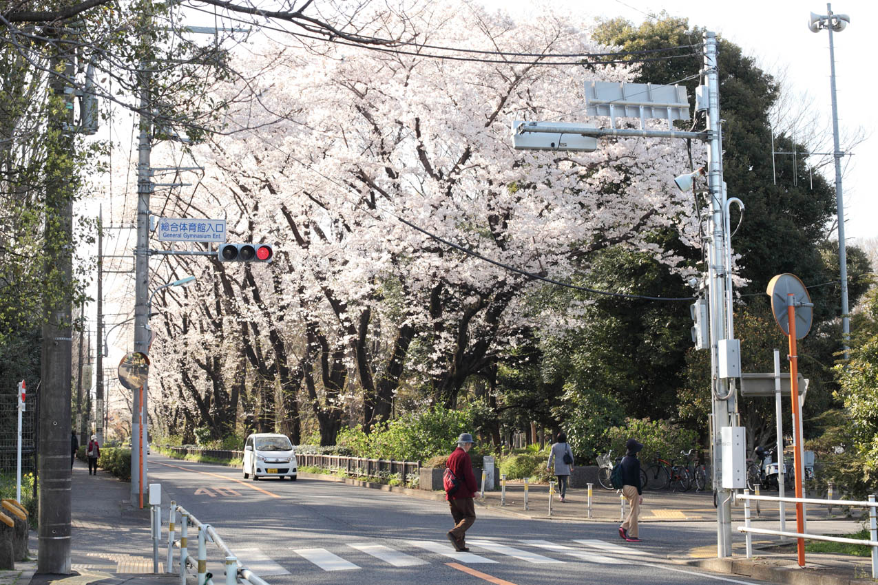 神代植物公園通り_c0299360_23582367.jpg