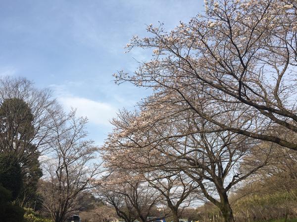 こころちゃんとお花見!_c0110361_14294934.jpg