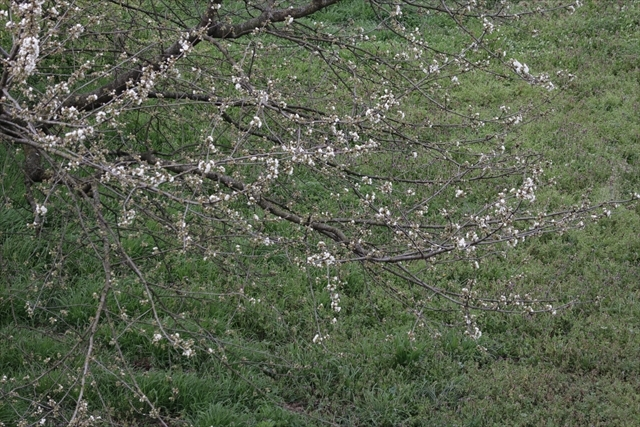 クレモナ 3月25日_d0047461_15465388.jpg